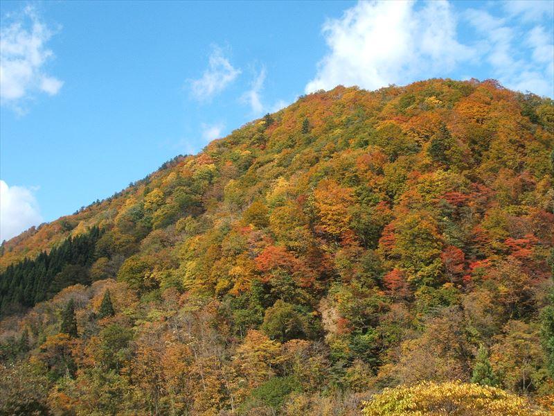 山に色が溢れます