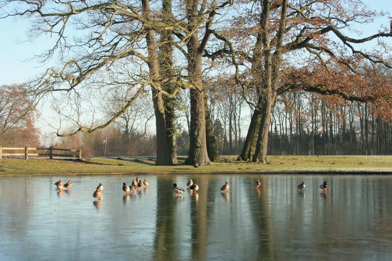8                      Schloss Darfeld
