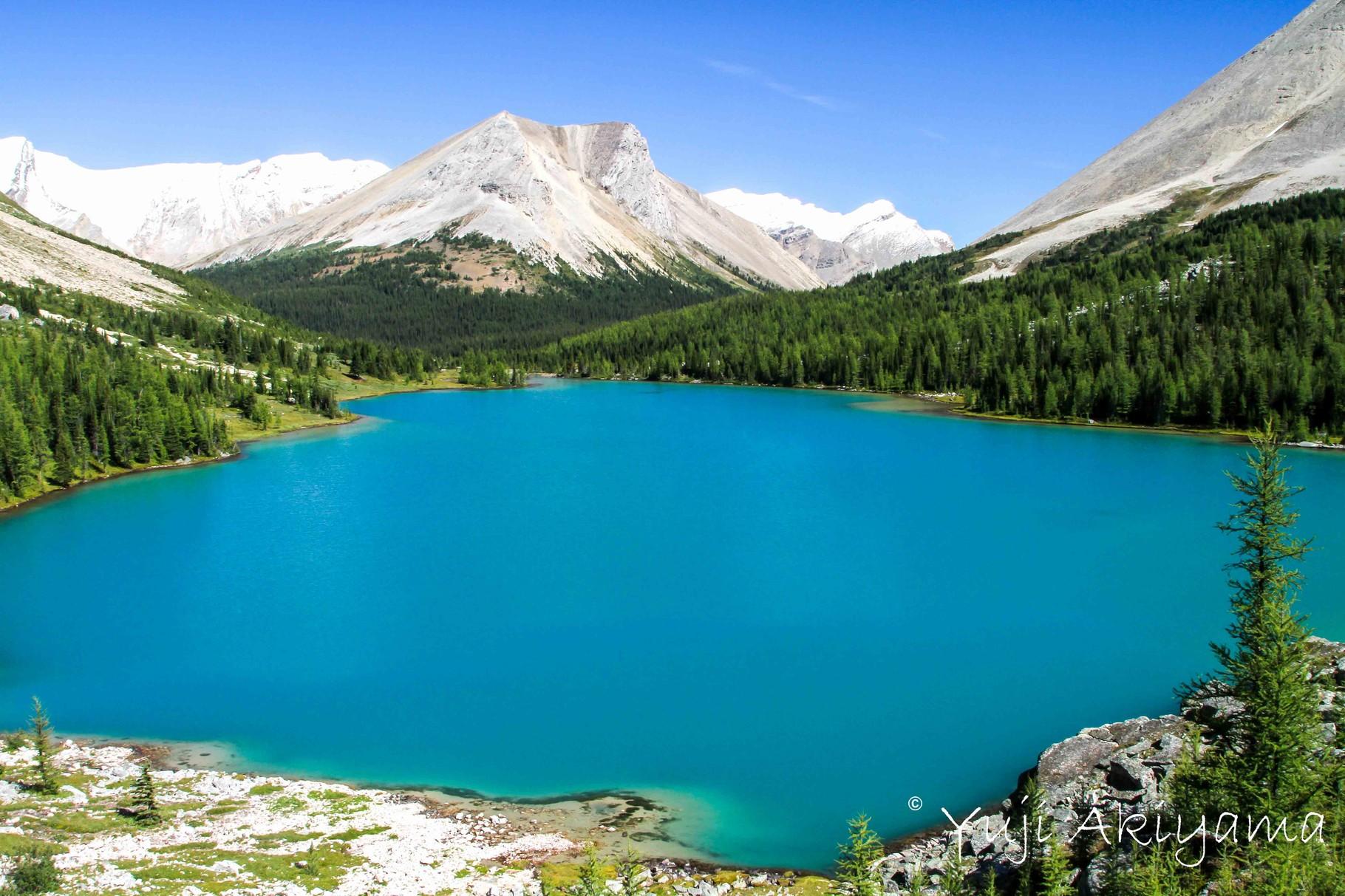 氷河湖色したミオソティス・レイク