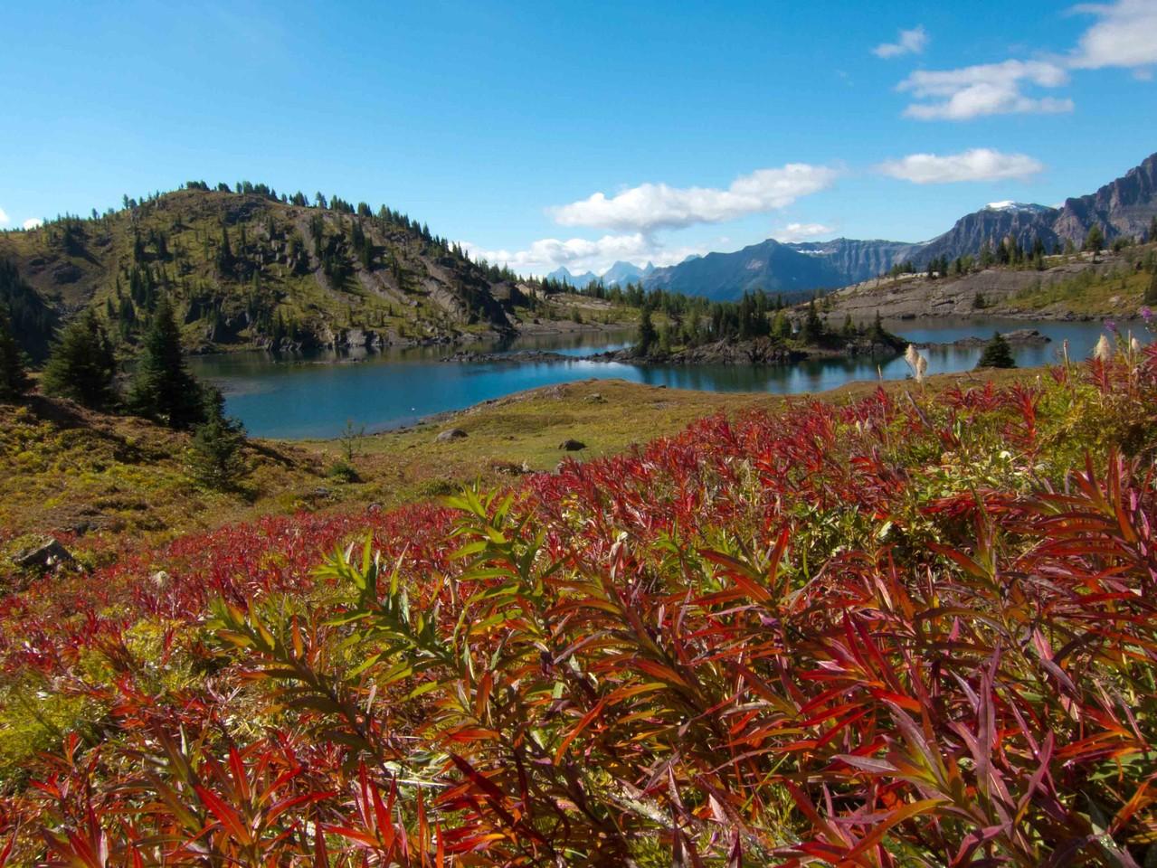 ヤナギランの紅葉とロックアイルレイク、サンシャインメドウハイク
