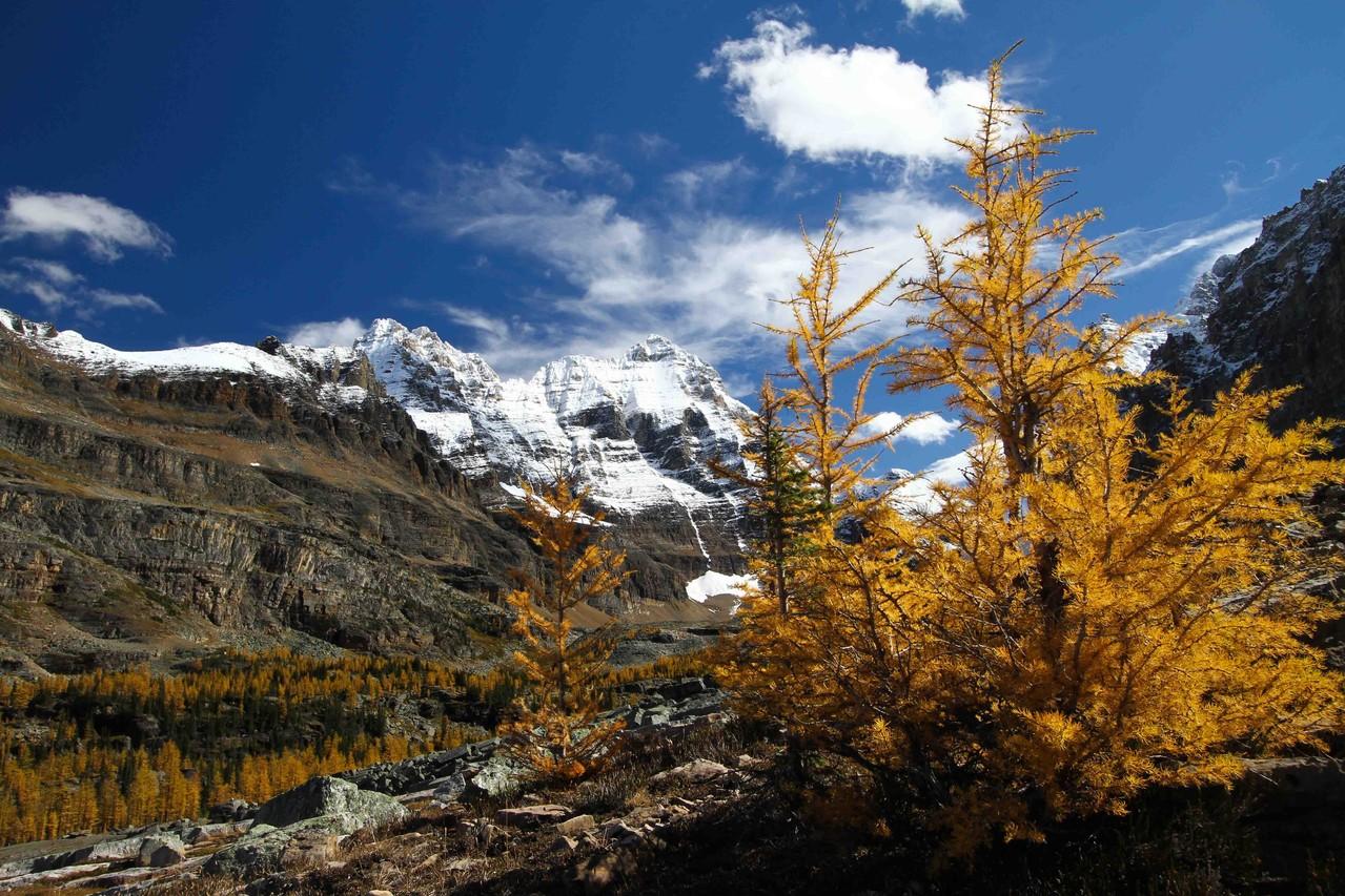 秋のカラ松の黄葉が有名なレイク・オハラエリア