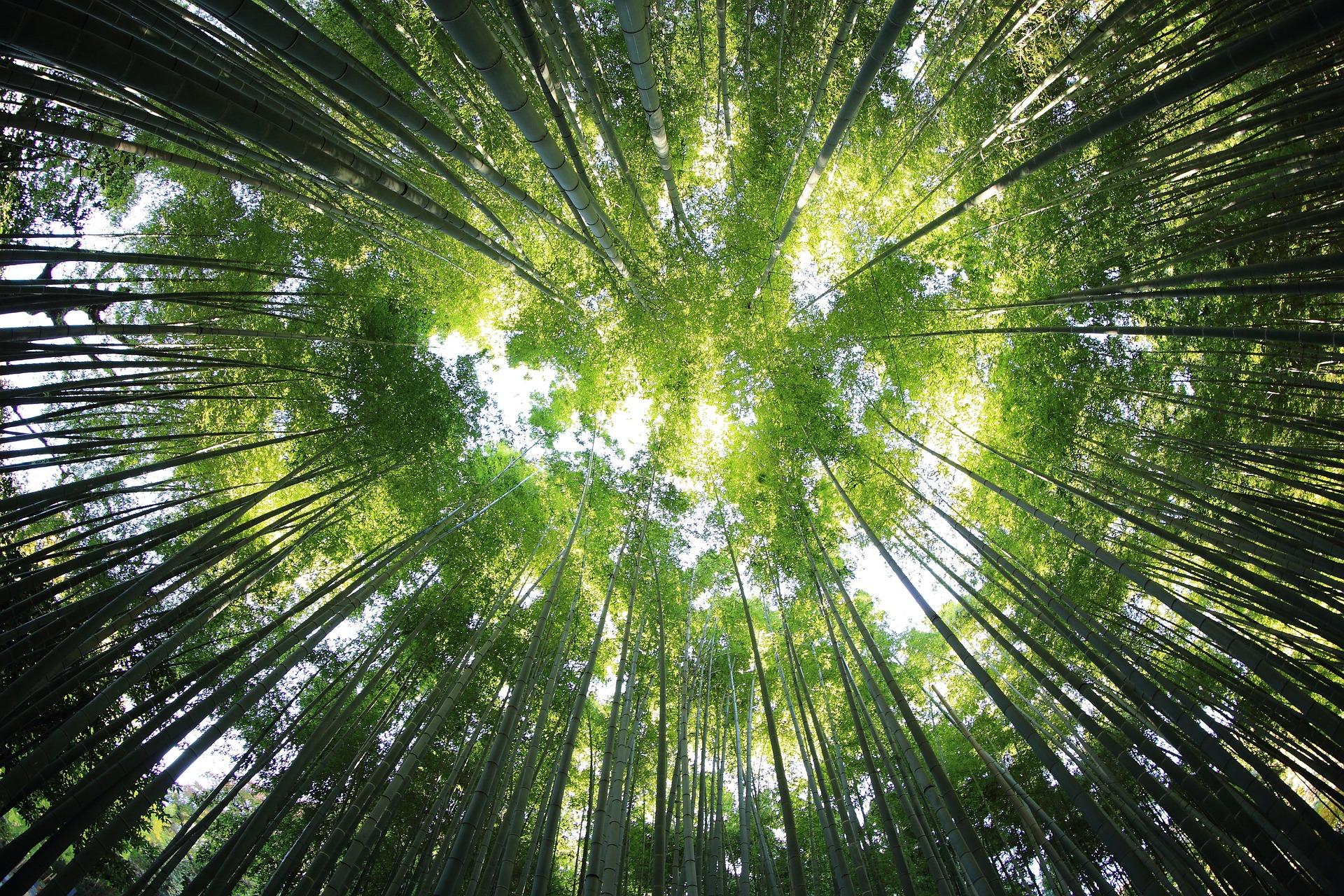 .. allerlei Waldwesen ...
