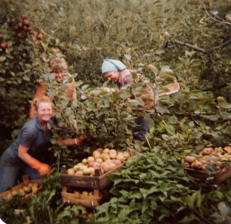 Äpfel in Queckenberg