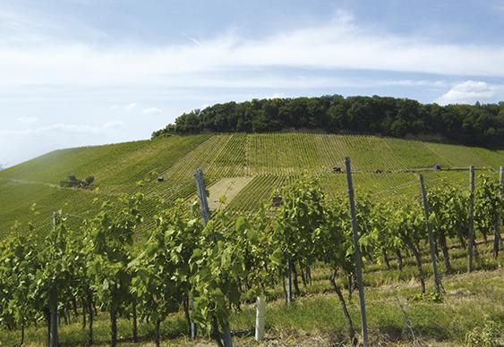 Anbauregion Württemberg - Inmitten des Heilbronner Lands