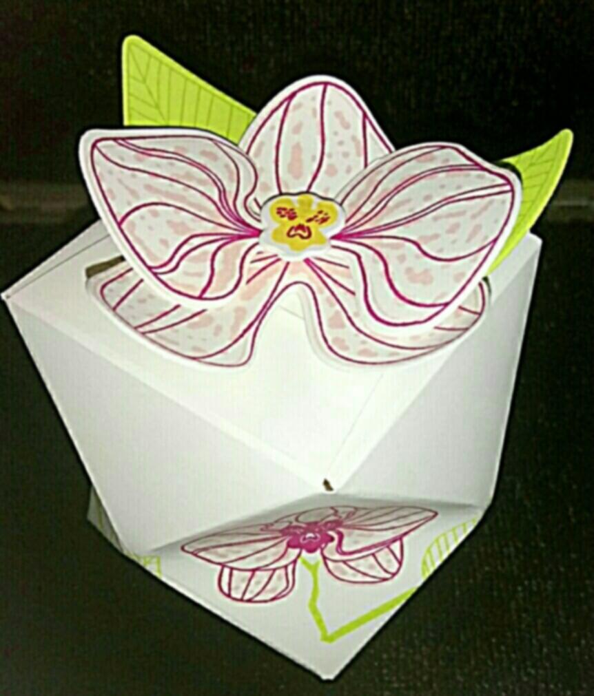 Orchideen dreidimensional...