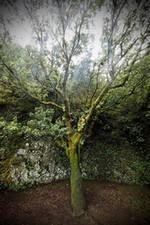 """""""Se doucher sous l'Arbre-fontaine de l'île d'El Hierro située dans l'archipel des Canaries. (p.37)"""