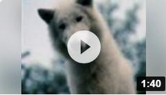 voir la bande annonce du film (2007)