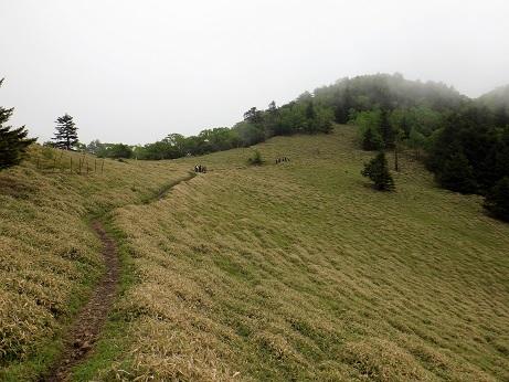 石丸峠の笹原