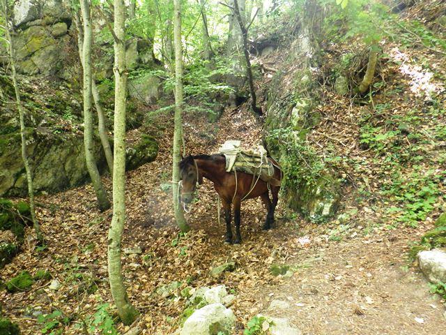 荷揚げ用の馬