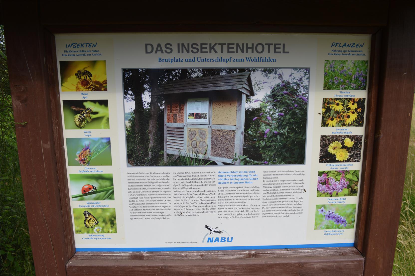 Schautafel am Insektenhotel