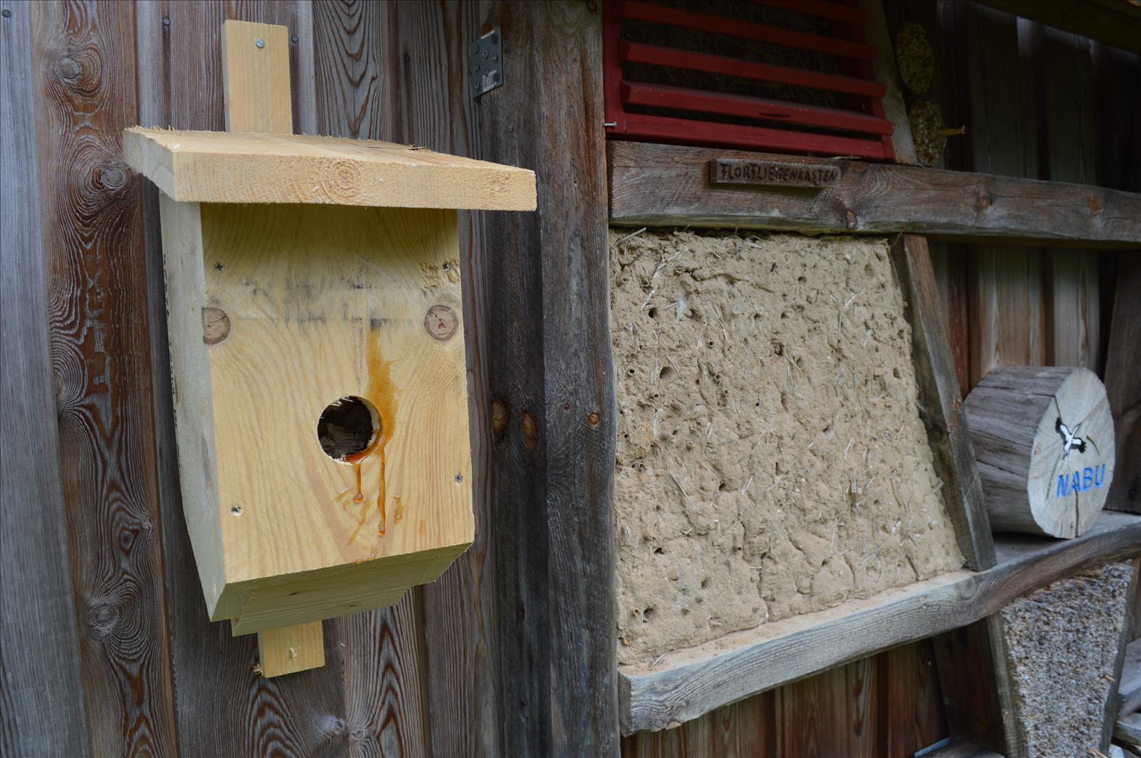 Vechta-Bergstrup:  Artenschutzmaßnahmen