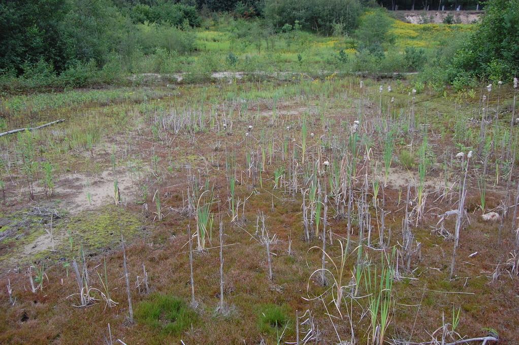 Umweltschaden: Wiesenhof-Grundwasserförderung legt Biotopteiche im Biotop Moorstraße trocken