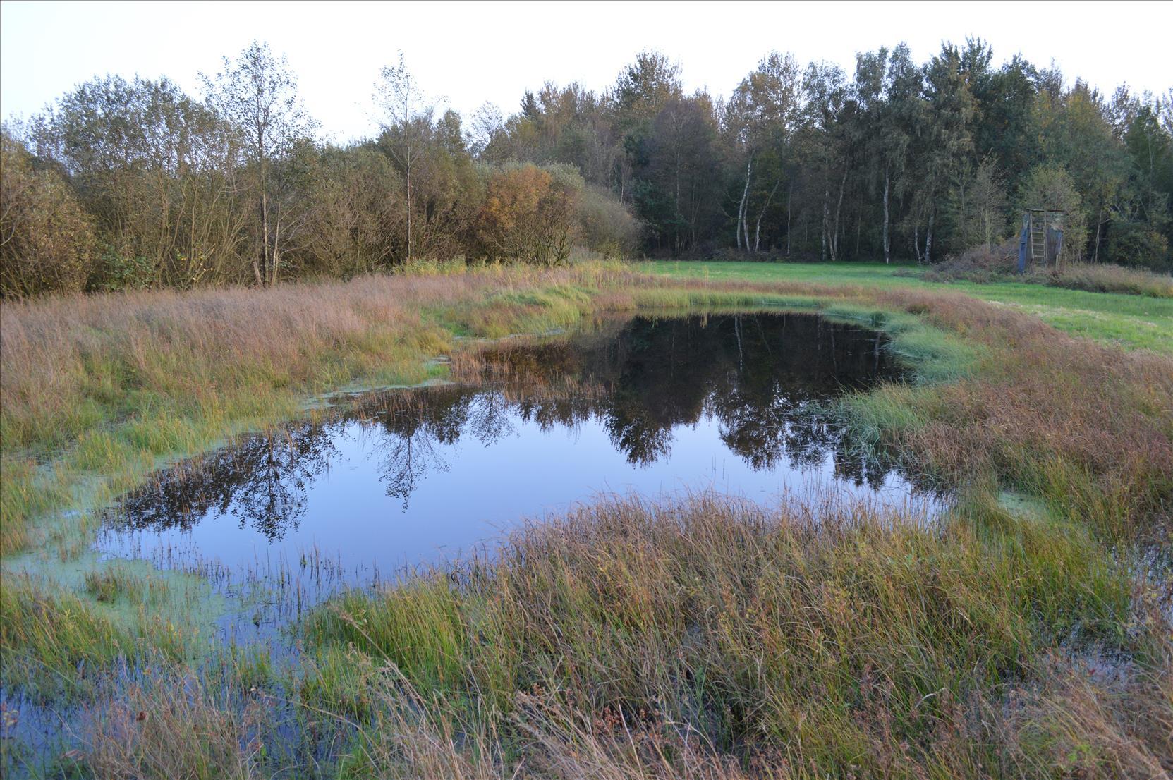Dinklage / Bockhorster Moor   -  Artenreiche Nasswiesen  des NABU
