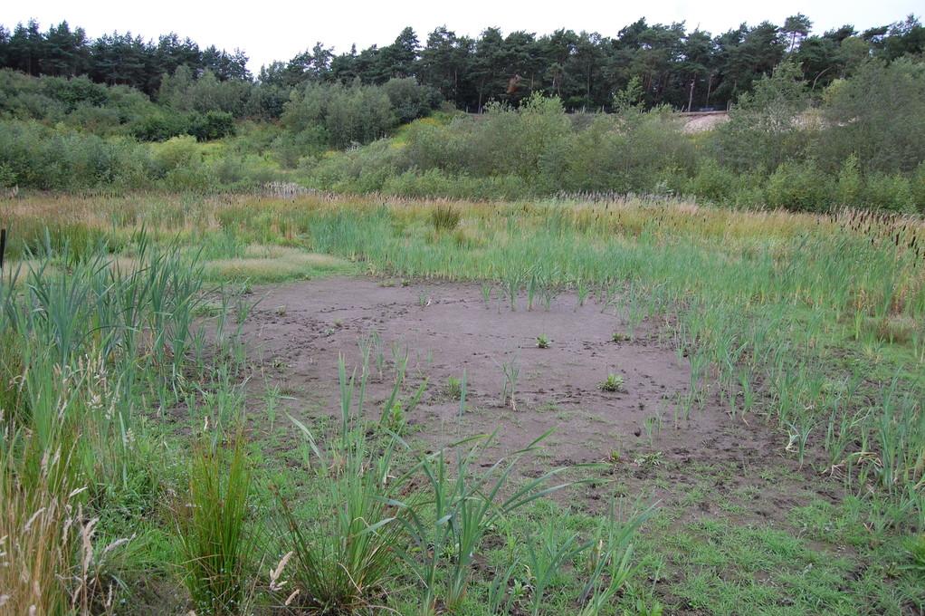 .... ein verregneter Sommer!   Wiesenhofs Wasserförderung legt trotzdem Lohnes wichtigste Amphibienlaichplätze trocken!
