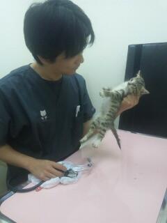 プリン先生と初診の暴れ子猫