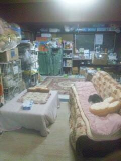 1階の猫室