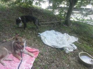 こん&さつき、林のピクニック