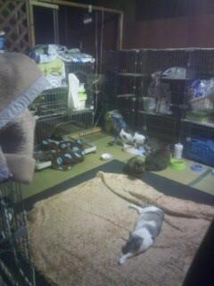 もうひとつの1階猫室