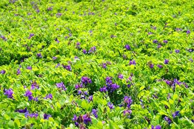福井市三里浜砂丘で2016年5月1日に撮影