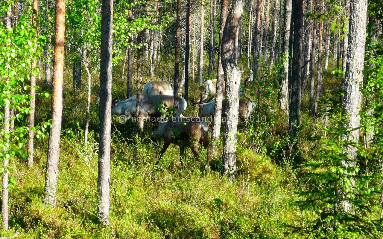 ... ils s'enfoncent dans les bois.