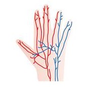 パーキンソン病・パーキンソン症候群は血液やリンパの循環がとっても大切