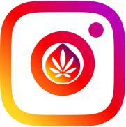 CBDaktiv Instagram