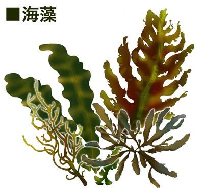 尿路結石の再発を予防するために、野菜や果物、海藻類を摂りましょう。