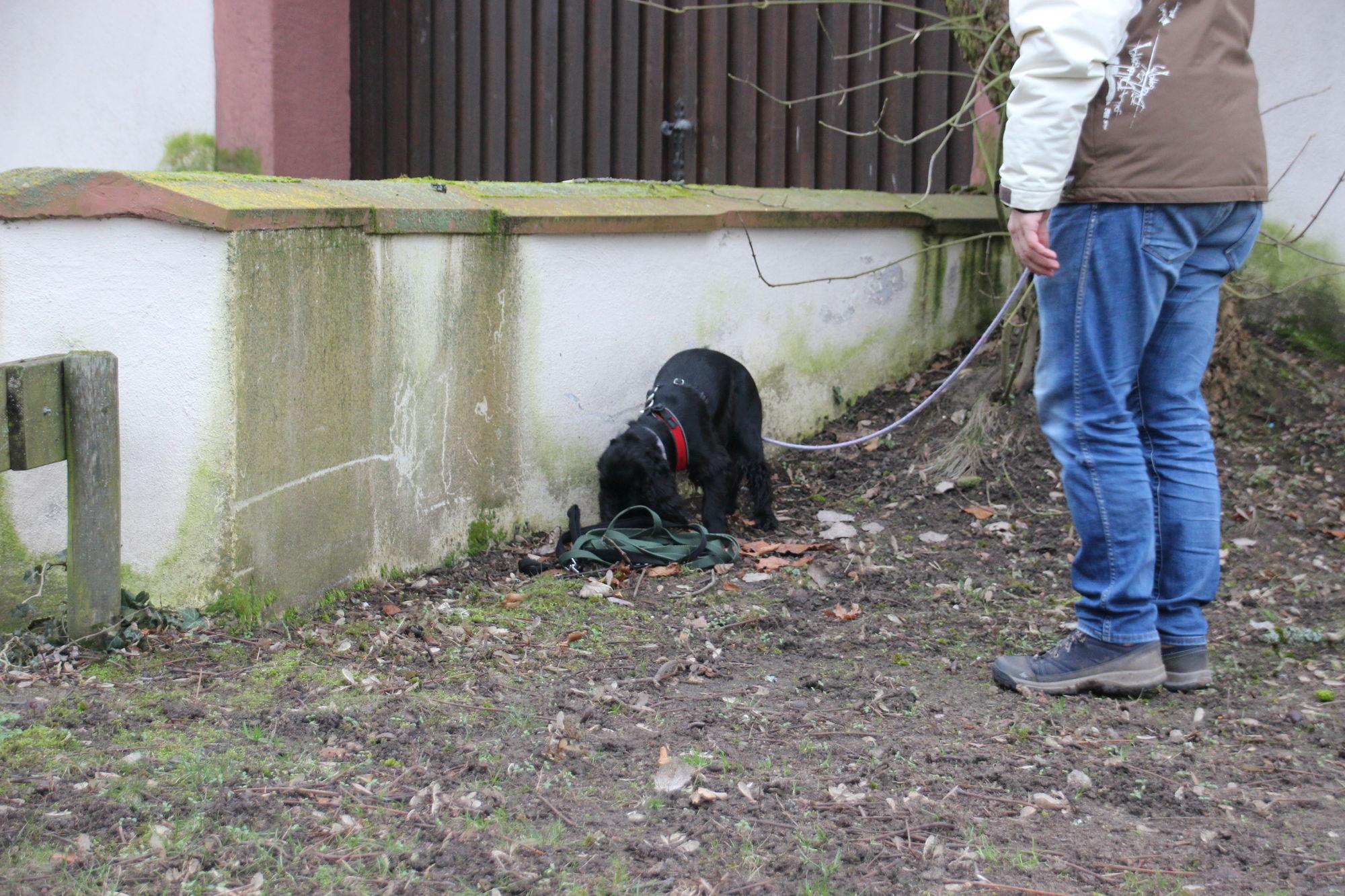 10 Meter Leine (die bestimmt nach viiiiielen anderen Hunden duftet 😉 ) liegen verwurschtelt auf dem Fitzelchen. Kein Problem!