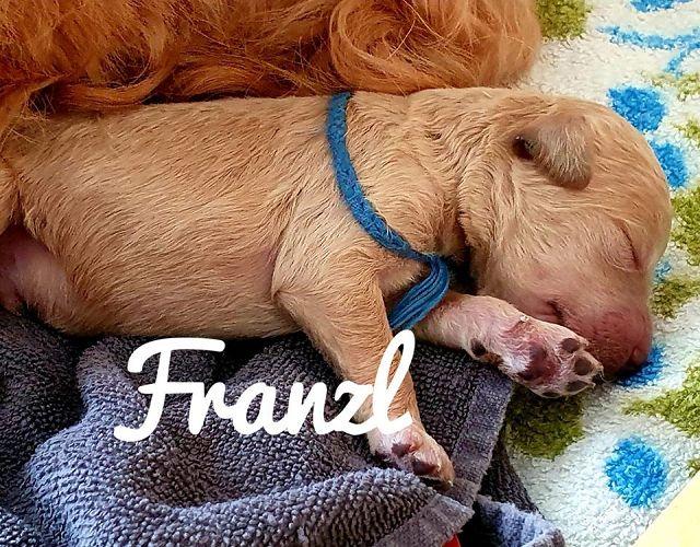 Fanny ist im bayrischen ja die Abkürzung für Franziska -  also brauchts auch noch nen Mami Bub - Franzl