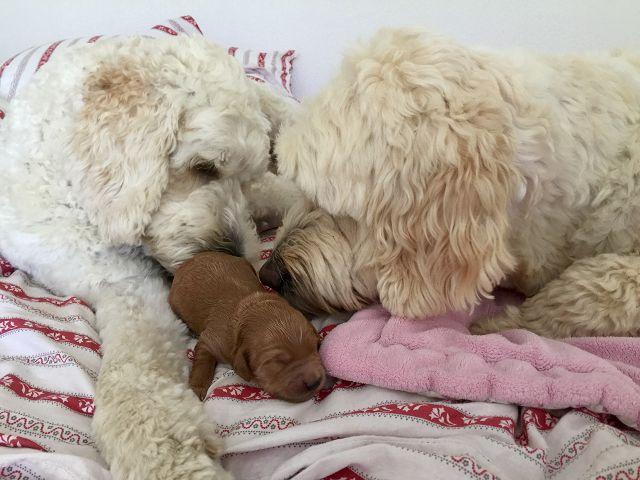 Frieda und Seppi kümmern sich derweil um dem Beppi