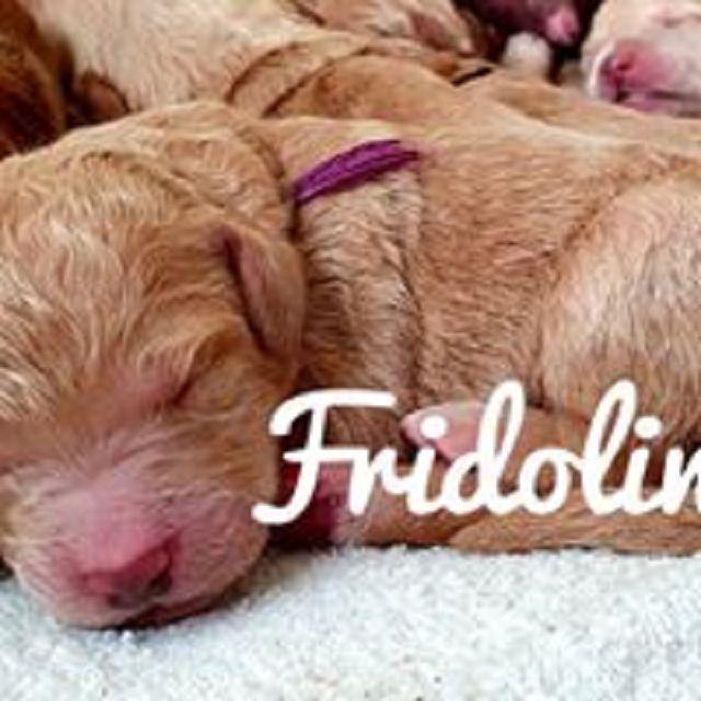 nach Oma Frieda benannt -  der Fridolin