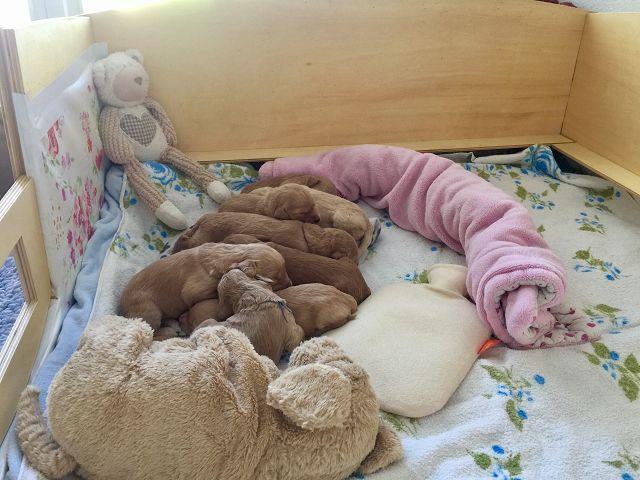 Anfang der 2. Woche waren sie noch richtige Babies