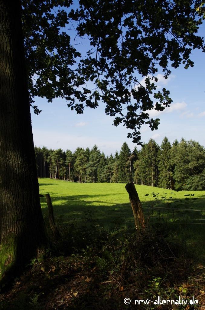 Verträumte Weiden und hügelige Wiesen wechseln sich mit dichtem Wald ab.