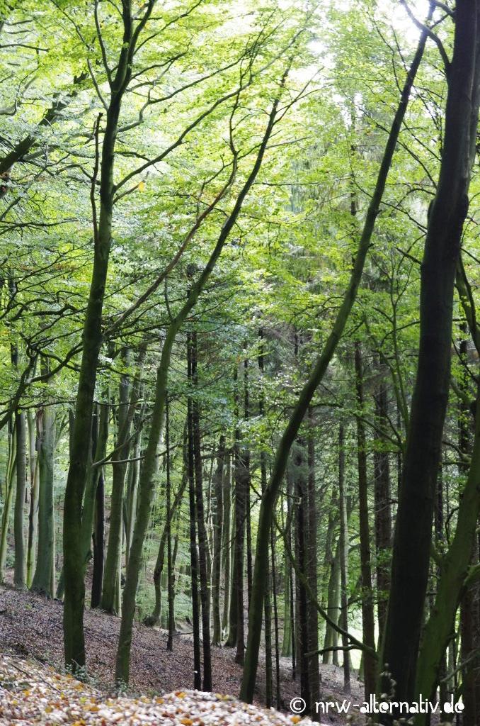Wie unterschiedlich Wald sein kann!