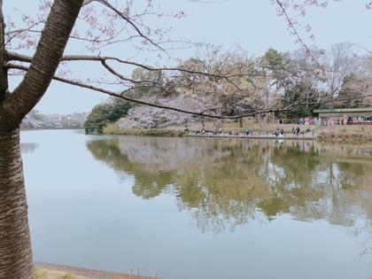 先日の花見の時の桜の写真です🌸