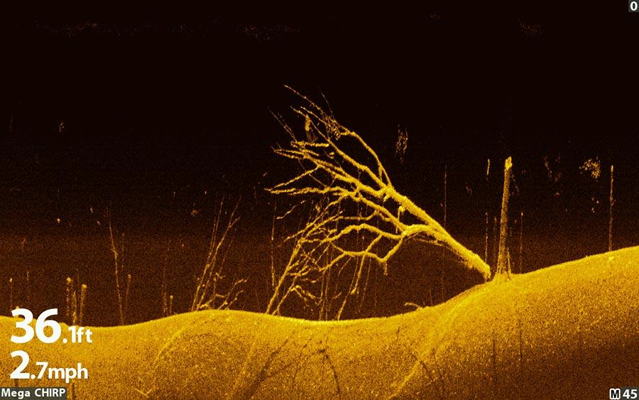 Interpretation nicht nötig: Deutlich zu erkennendes Unterwassergehölz im DOWN IMAGING