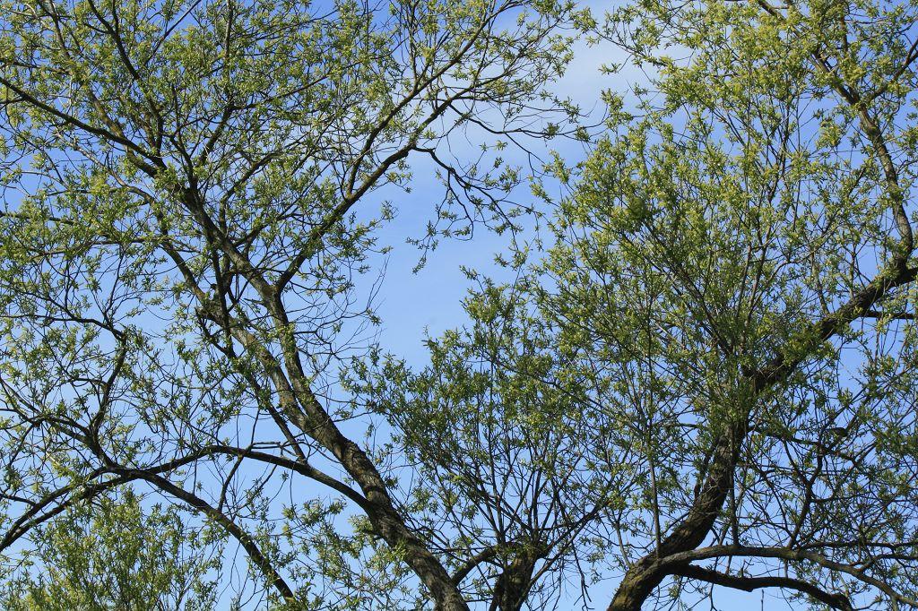 Bäume am Kiessee -Göttingen