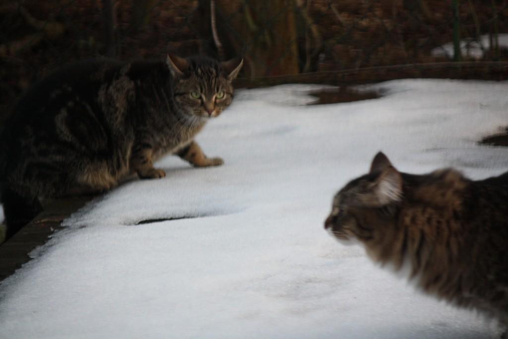 Nachbarskater, oh