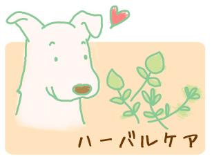 犬 手作りごはん 生食 ダイエット ハーブ 歯磨き