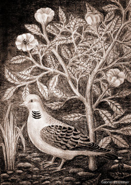 Drawing of a pigeon with roses (pencil)