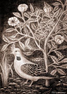 Zeichnung einer Taube mit Rosen (Bleistiftzeichnung)