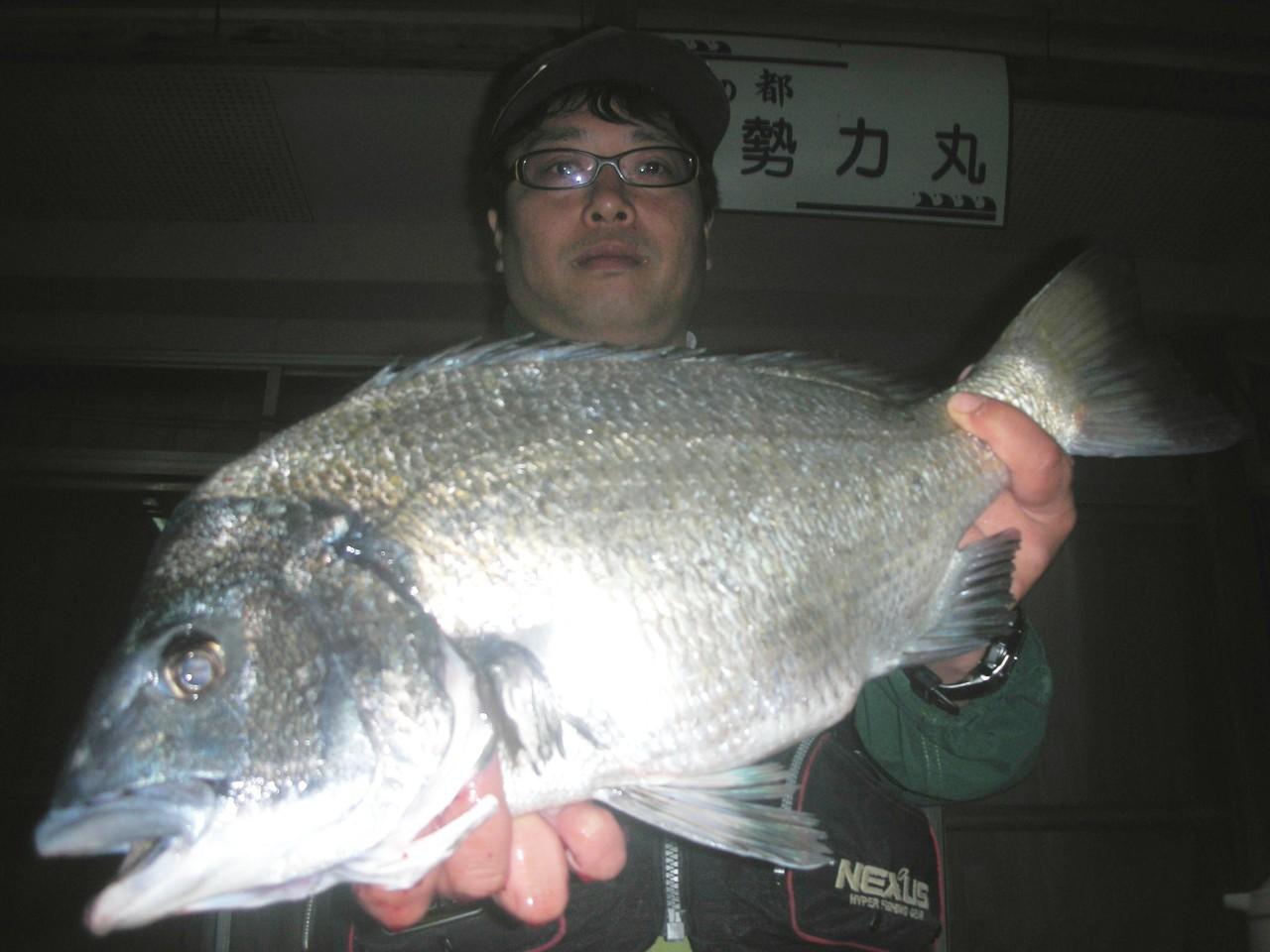 4月27日 冨安 啓二さん 51.2㎝