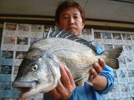 5月11日 磯からフカセ釣り 重村さん 51㎝