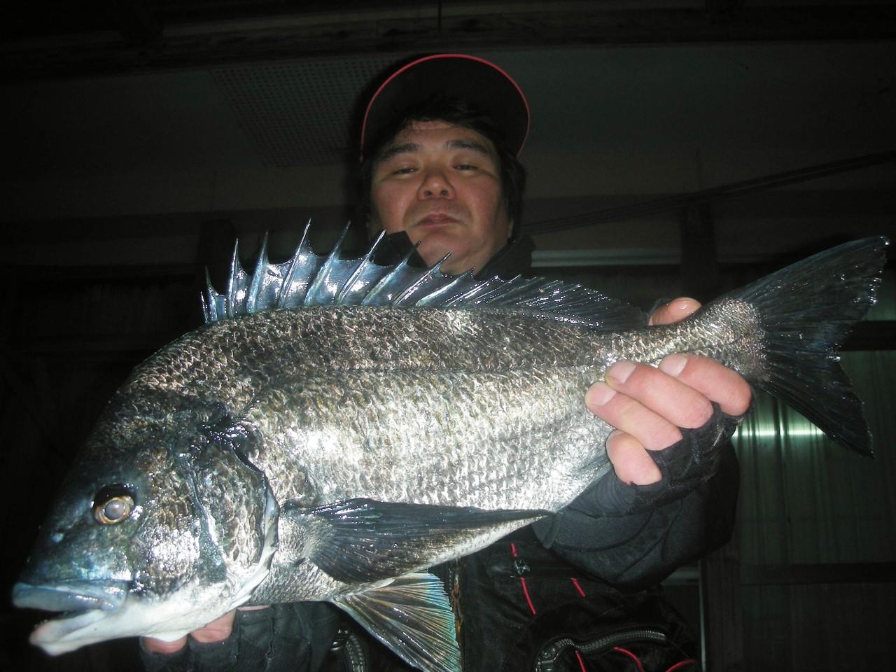 3月26日 磯釣りで渡辺 和茂さん 50.2㎝