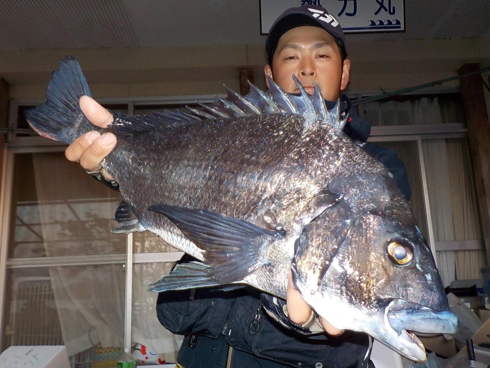 4月28日 磯釣りで辻さん ガバチヌ54㎝を頭に5匹