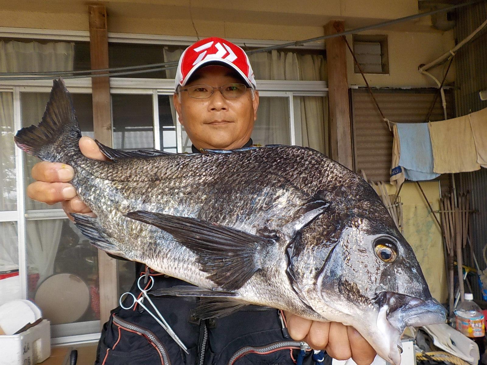 6月3日 磯釣りで野田さん ガバチヌ51.3㎝