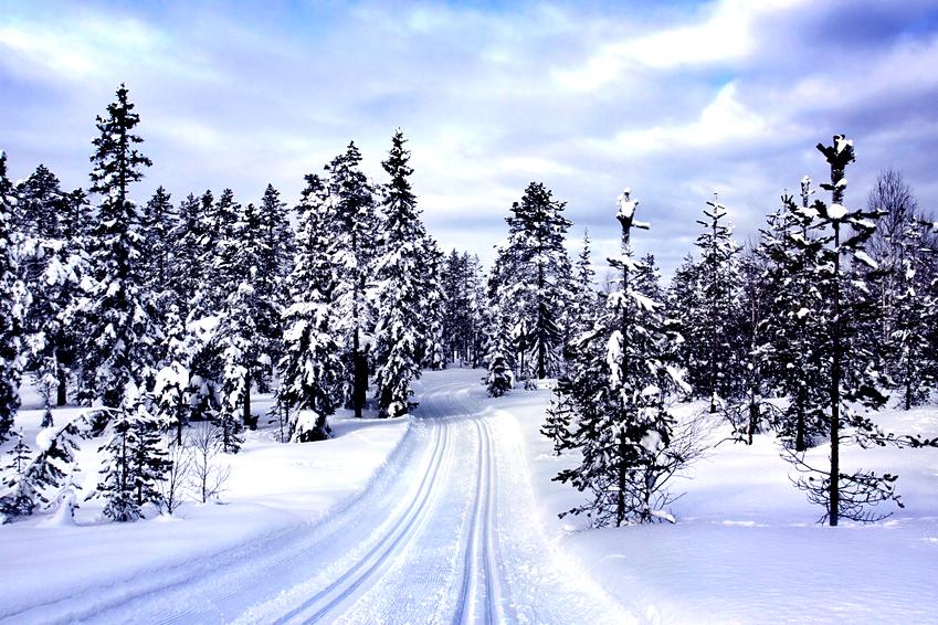 Winter im Thüringer Wald