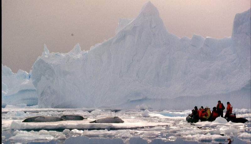 11º. ¡No se pierda el Antártico! Todavía tengo los ojos emocionados.