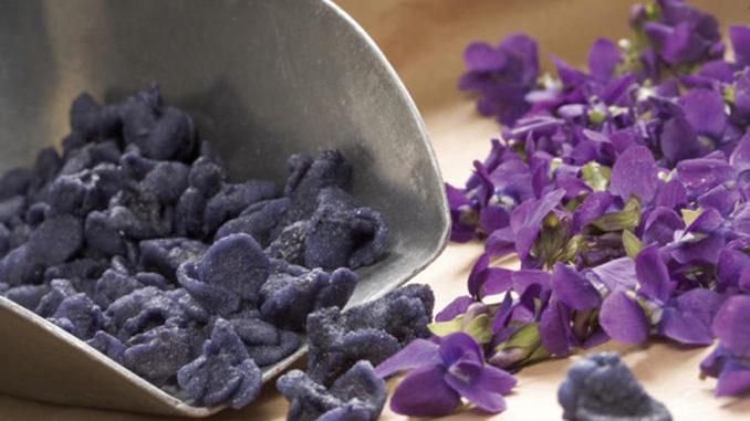 Violetas de Toulouse