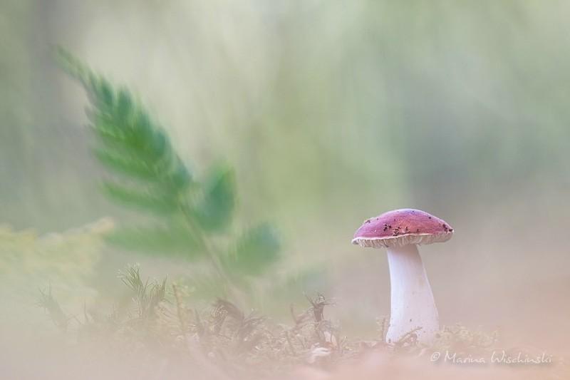 """Mal ein ganz anderes """"Rotkäppchen"""" im Walde"""